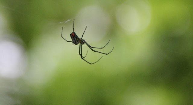 クモによる感染症